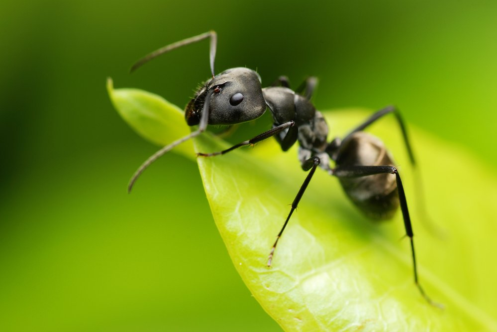 What Kinds Of Ants Do You Find In South Jersey?