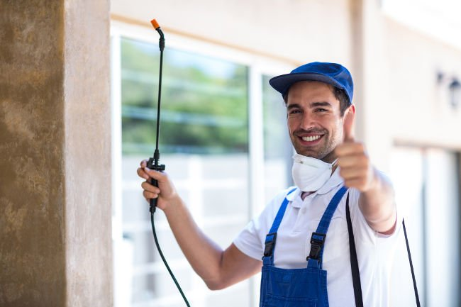 Successful pest control for your home