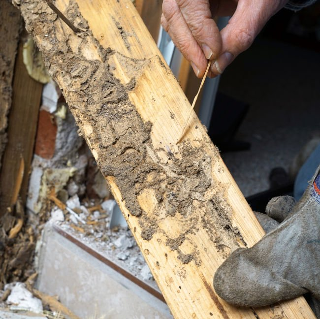 Early Warning Signs You May Have Termites