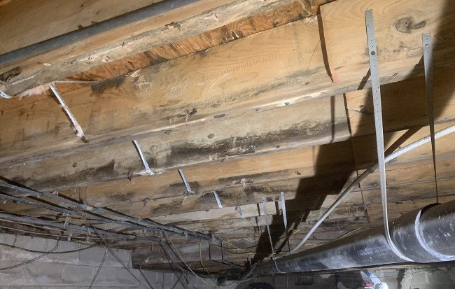 Mold Remediation in Attic
